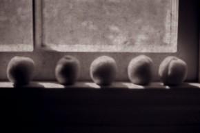 apricot annihilation. Jour7.